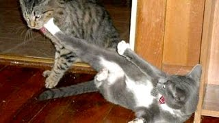 HAVE A LAUGH - The BEST & FUNNIEST ANIMAL VIDEOS compilation