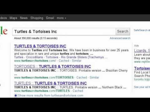 The Best Places to Buy Turtles
