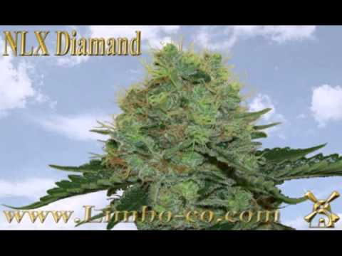 New Grow Website with 24 Different strain Seeds, Nutrition, Mapito and an Open Grow Forum