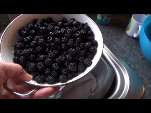 Making Blackberry wine.Part 1