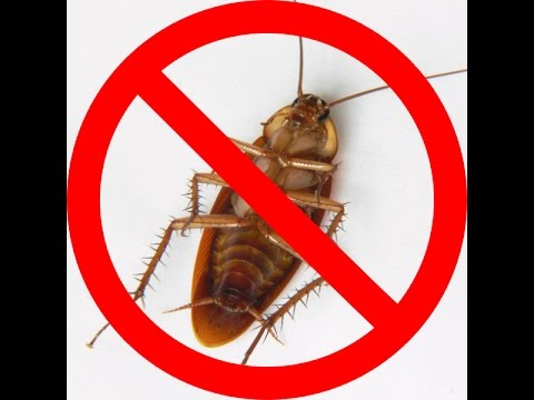 How to Get Rid of Roaches Completely