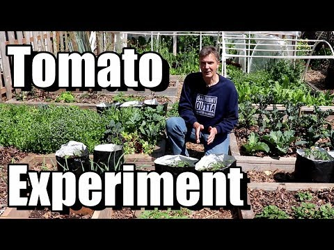 My Quest for Tomatoes in June, Week 5 Update
