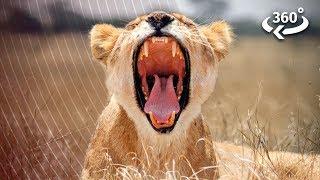 Predators vs. Prey On The African Savanna