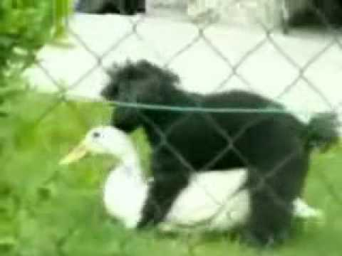 Xxx Mp4 Duck And Dog Animals Fucking 3gp Sex