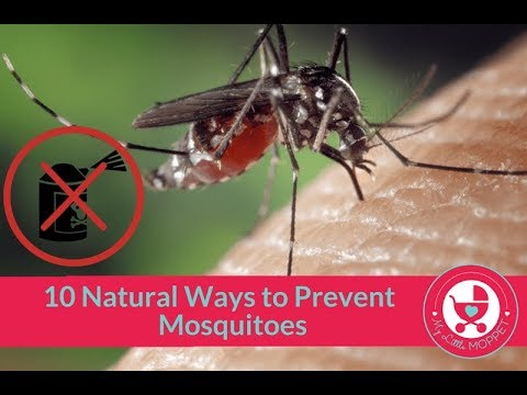 How to get rid of Mosquitoes Naturally