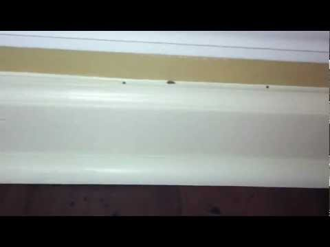 Signs of Termites inside a home