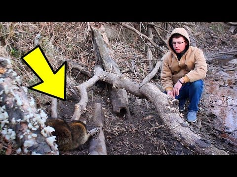 Trapping GIANT Raccoons and Setting Traps on SIGN!!!