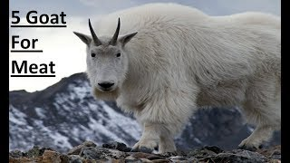What is the Best Breed of Meat Goat? - PakVim net HD Vdieos