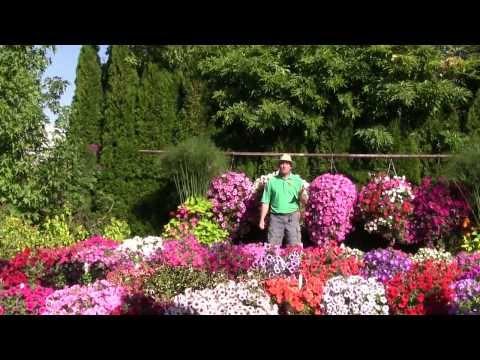Trailing Petunia: Part 1