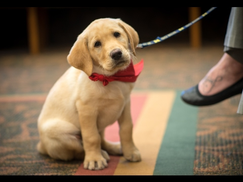 Clyde the Courthouse Therapy Dog of Midland County Probate Court