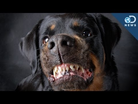 Are Some Dog Breeds More Aggressive?
