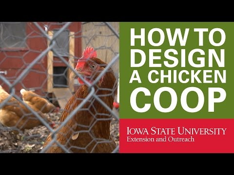 Backyard Chickens: How to Design Your Chicken Coop