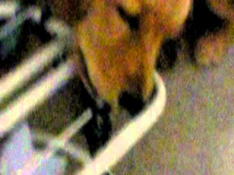 why duke's chewing on the chair.AVI
