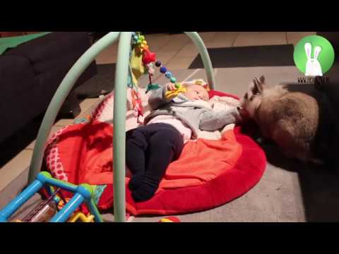 Rabbits teach baby to roll over