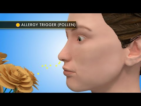 Allergy Week: Tips for 24-Hour Protection