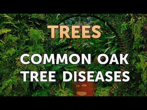 Common Oak Tree Diseases
