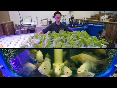 Ontario food bank harvesting fresh fish and greens indoors