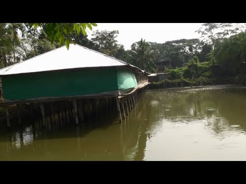 Business Ideas - Integrated Fish And Layer Chicken Farm Business Ideas