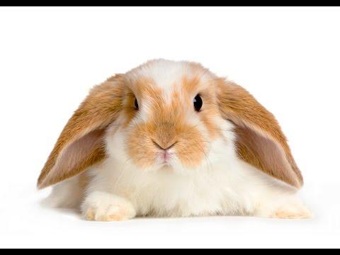 How To Clip Your Rabbit's Nails - Zetland Vets, Bristol