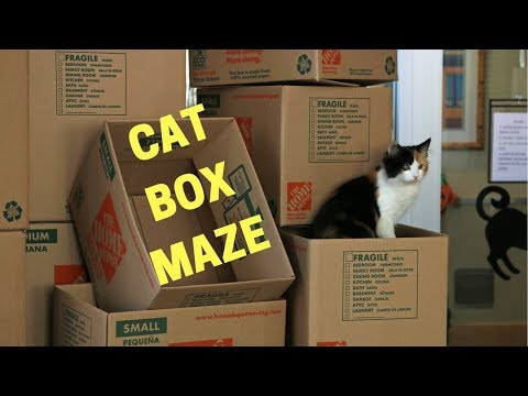 CAT BOX MAZE FOR SHELTER CATS