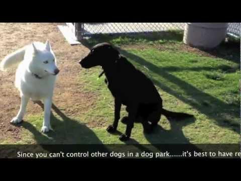 Control at dog park