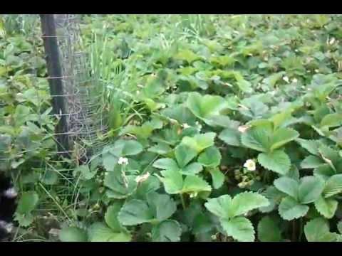 Spring Garden Growing: Helioforge