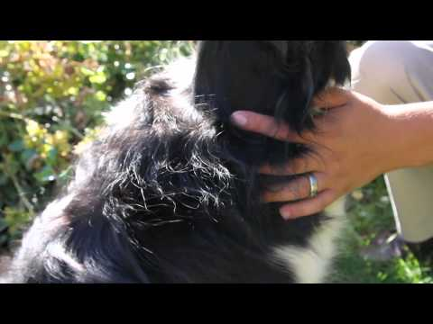 D is For Dogs - Healthy Gums