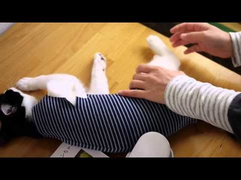 How to help you put a super easy post-operative clothing cat■CAT25NET,cat25,猫ニャーゴ