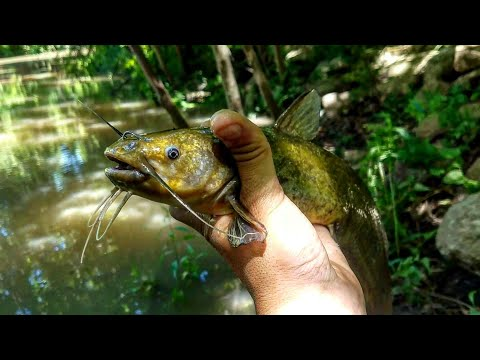 How To Catch Bullhead Catfish, for Beginners