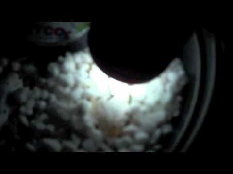 Leopard gecko egg Update #1 ( Candling )