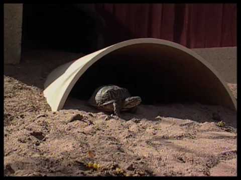 How To Create A Turtle Habitat