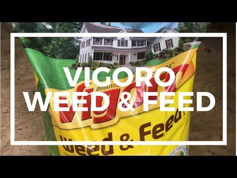 Vigoro Weed And Feed Review