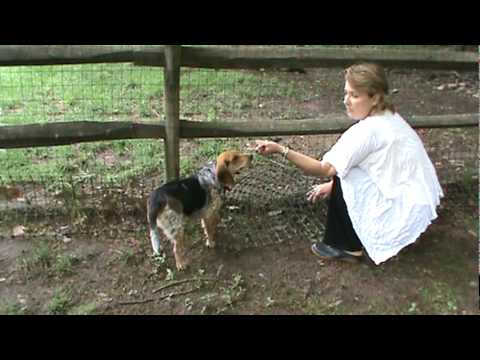 Realtor Lisa Patton Shows You How to Dog-Proof Your Fence
