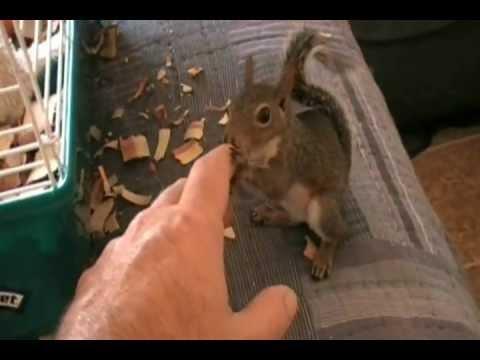 Trained Squirrel