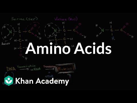 Introduction to amino acids | Macromolecules | Biology | Khan Academy