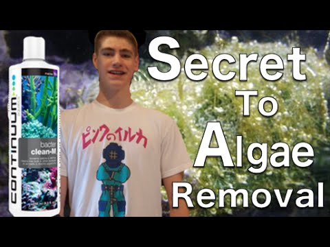 Secret to Remove Any Algae! Bacter Clean-M Continuum Aquatics