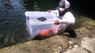Plastic Bin Fish Trap Catches BIG FISH! DIY | Monster Mike Fishing