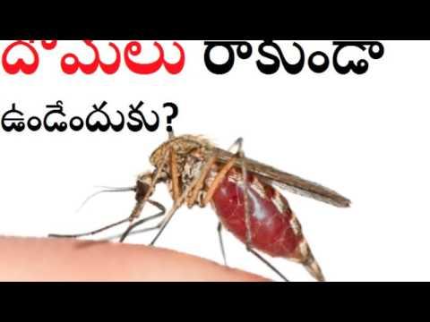 Mosquito repellent home made telugu
