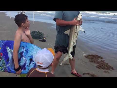 Shark at Surfside Beach - May 5 2018