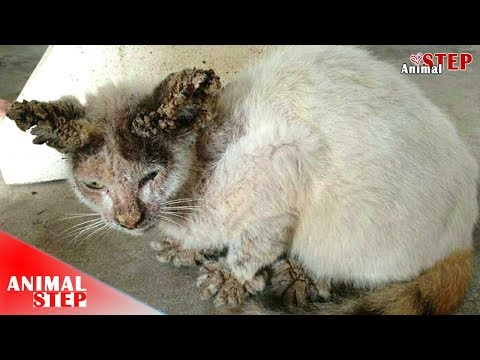Stray Cat Rescued From Severe Mange