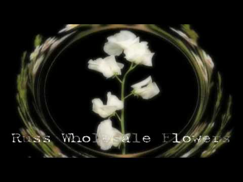 Fresh Cheap Wholesale Flowers | Wholesale Wedding Flowers
