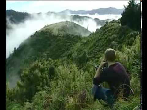 Million dollar Marijuana plot East Cape - New Zealand