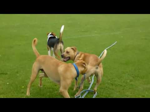 My Dog Is Aggressive Towards Other Dogs - Hidden Laws of the Pack