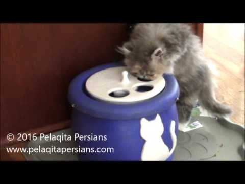 Ebi Fountain with Persian Cat feature