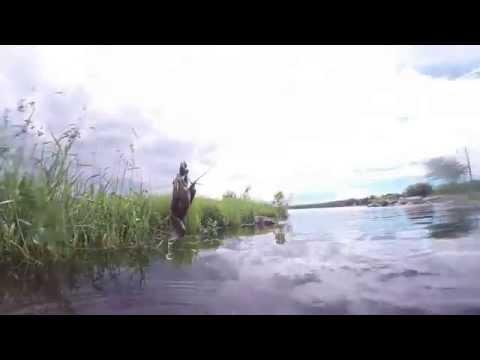 How to Catch a Crawfish - Leech Lake Minnesota
