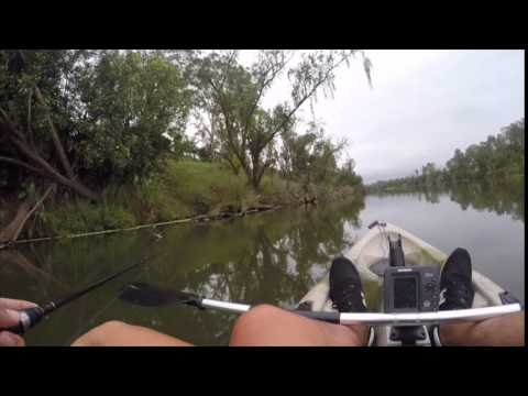 Australian Bass on surface lures