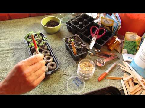 How to Grow/Start Tomato Seeds Indoors in Peat Pellets - The Rusted Garden 2014