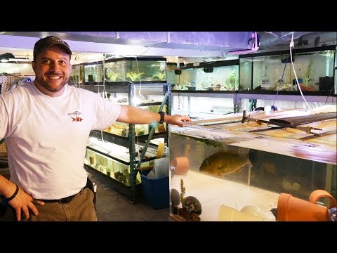 35,000+ Gallons of African Cichlids - Returning to Something Fishy