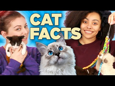 Cat Lovers Play With Kittens While Learning Cat Facts