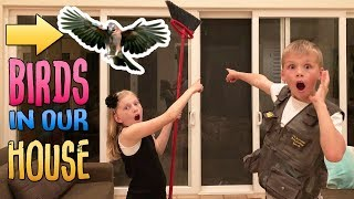 Wild Birds in our House & Another Flash Flood || Mommy Monday